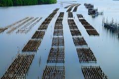 Aquaculture w chanthaburi, Thailan zdjęcia royalty free