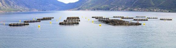 Aquafarming Στοκ φωτογραφίες με δικαίωμα ελεύθερης χρήσης