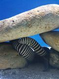 Aqualife Στοκ εικόνες με δικαίωμα ελεύθερης χρήσης
