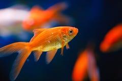 Aqualife 2 Royalty Free Stock Photos