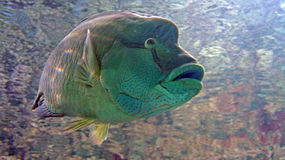 Aqualife Στοκ Εικόνες