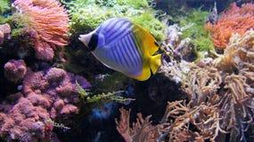 Aqualife Στοκ φωτογραφία με δικαίωμα ελεύθερης χρήσης