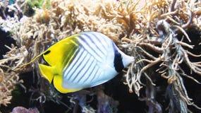 Aqualife Στοκ φωτογραφίες με δικαίωμα ελεύθερης χρήσης