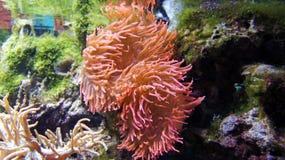 Aqualife Στοκ Φωτογραφίες