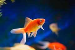 Aqualife Royalty Free Stock Photo