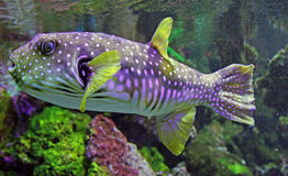 Aqualife. Underwater life with many colorful fish and corals Stock Image