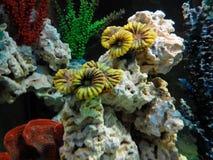aqualiv Royaltyfria Bilder