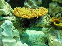 aqualiv Arkivfoton