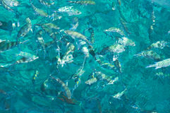 aquamarinekanfas Royaltyfri Fotografi