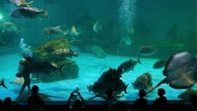 Aquanautmens en mooie vissen in het aquarium stock footage