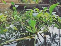 Aquaplants Стоковое фото RF