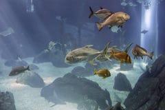 Aquaqium dennej ryby omijanie obok zdjęcia stock