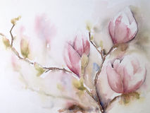 Aquarel or watercolor of Magnolia-flowers. Watercolor or aquarel of branches with pink Magnolia-flowers on paper Stock Photography