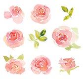 Aquarela abstrata cor-de-rosa dos elementos das rosas ilustração do vetor
