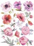 Aquarela ajustada com flores do jardim Ilustração tirada mão no fundo branco ilustração royalty free