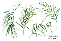 Aquarela ajustada com folhas de palmeira tropicais Ramo exótico das hortaliças pintados à mão do coco no fundo branco botanical ilustração do vetor