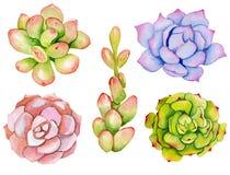 Aquarela ajustada com plantas carnudas Fotos de Stock