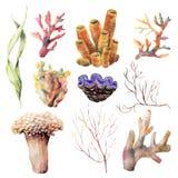 Aquarela ajustada com vegetais e animal do recife de corais Ramos subaquáticos pintados à mão e escudo isolados no branco ilustração stock