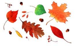 Aquarela Autumn Leaves Set Imagem de Stock