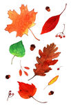 Aquarela Autumn Leaves Set Fotografia de Stock