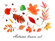 Aquarela Autumn Leaves Set Fotos de Stock Royalty Free