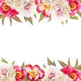 Aquarela branca e vermelha da flor das peônias ilustração royalty free