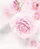 Aquarela cor-de-rosa das rosas Fotos de Stock Royalty Free
