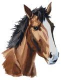 Aquarela da cabeça de cavalo ilustração stock