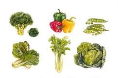 Aquarela da ilustração de Vegetabl Backgronds Imagens de Stock Royalty Free