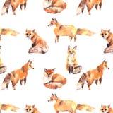 Aquarela diferente das raposas vermelhas do teste padrão ilustração stock
