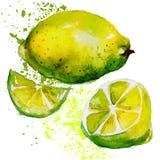 Aquarela do limão Fotografia de Stock Royalty Free