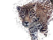 Aquarela do retrato do leopardo ilustração do vetor