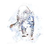 Aquarela do retrato do leopardo ilustração royalty free