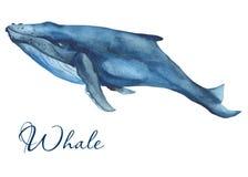 Aquarela dos mamíferos do oceano ilustração do vetor