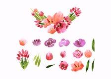 A aquarela floresce a coleção das peônias das rosas Foto de Stock Royalty Free