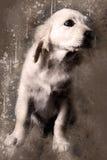 Aquarela Labrador Foto de Stock