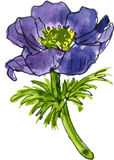 Aquarela que tira a flor azul Fotos de Stock