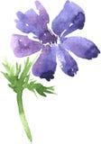 Aquarela que tira a flor azul Imagem de Stock