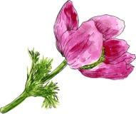 Aquarela que tira a flor cor-de-rosa Fotografia de Stock