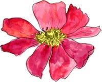 Aquarela que tira a flor vermelha Fotografia de Stock Royalty Free