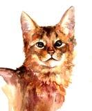 Aquarela vermelha do gato Foto de Stock