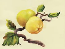 Aquarelläpfel, die auf Baumvektorillustration malen Stockfotografie