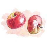 Aquarelläpfel mit farbiger Stelle Stockfotografie