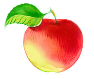 Aquarell Apple lizenzfreie abbildung