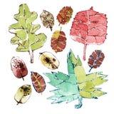Aquarell Autumn Leaves Set Stockfoto