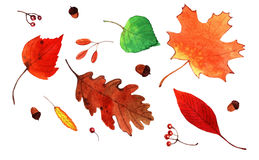 Aquarell Autumn Leaves Set Stockbild