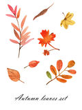 Aquarell Autumn Leaves Set Lizenzfreies Stockfoto