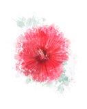 Aquarell-Bild der Hibiscus-Blume Stockfoto