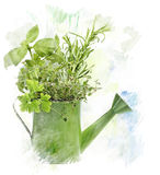 Aquarell-Bild von Kräutern Stockbild