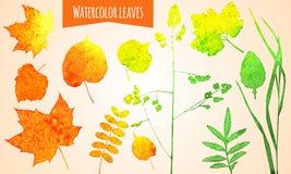 Aquarell-Blätter Stockfotos